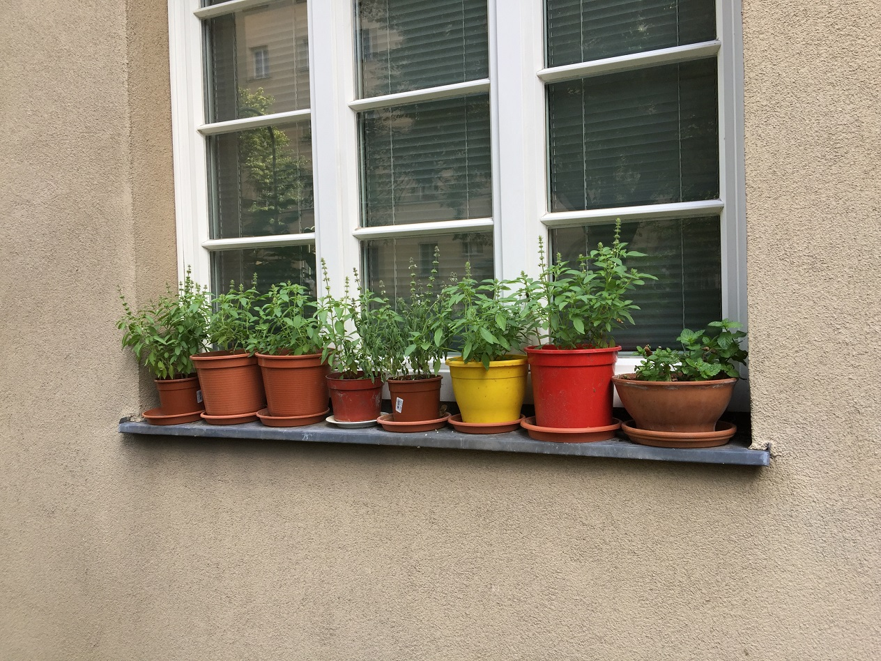 Schöne Kräuter auf der Fensterbank - aber nicht vor Absturz gesichert