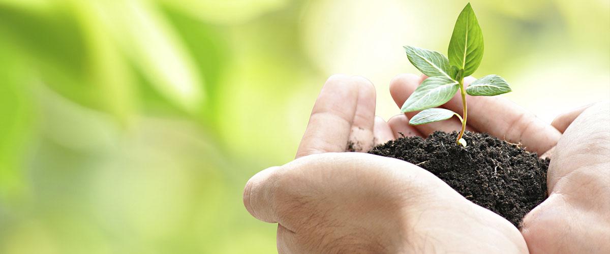 Green Creations - macht die Fensterbank zum Lebensraum