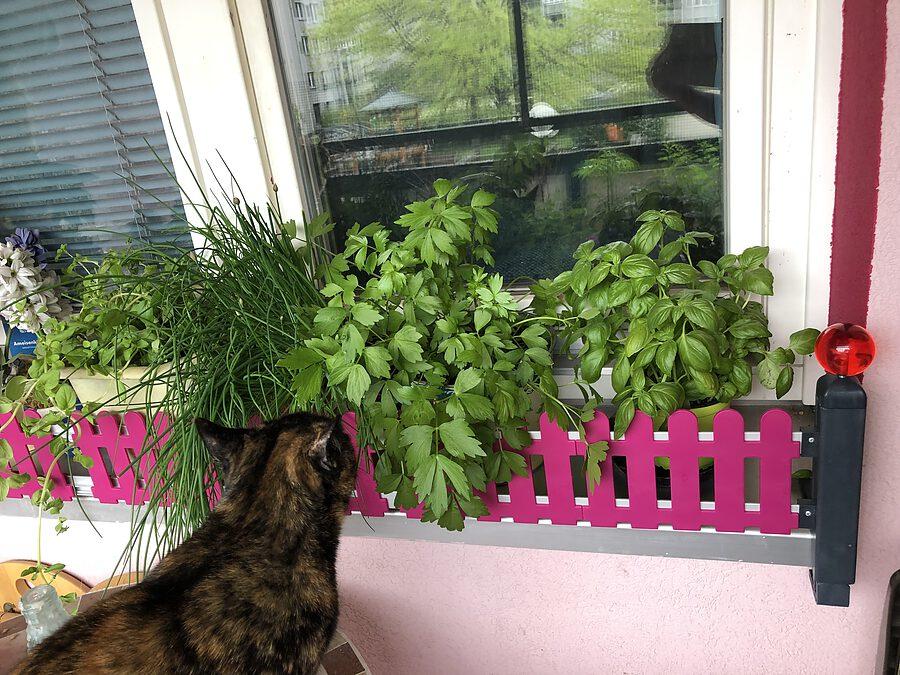 MASU Kräutergarten gefällt der Katze