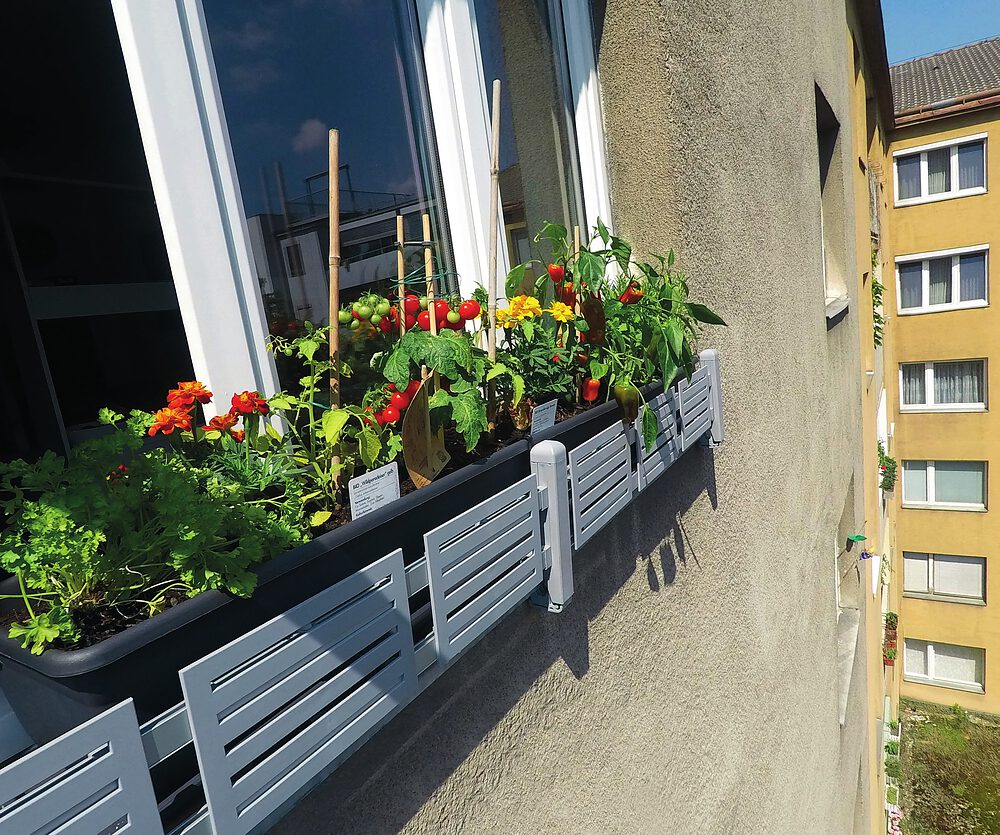 Deine Fensterbank wird zum Kräutergarten